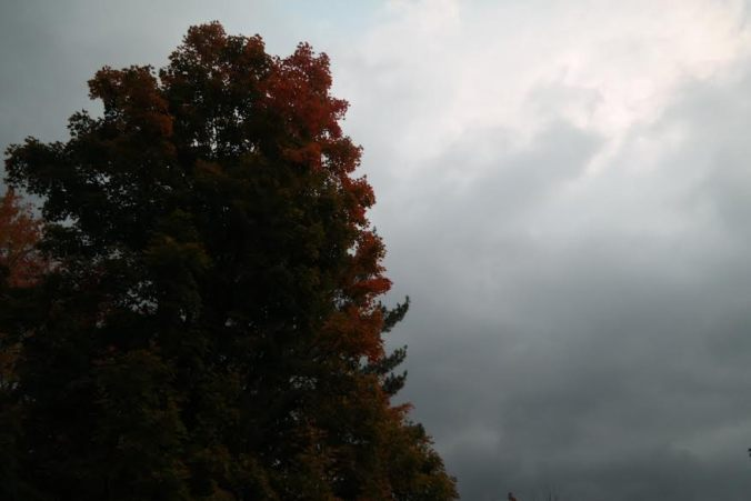I just want to show the progression of the october trees, this photo was taken on october 9th.