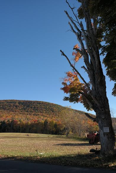 tree over mtn foliage