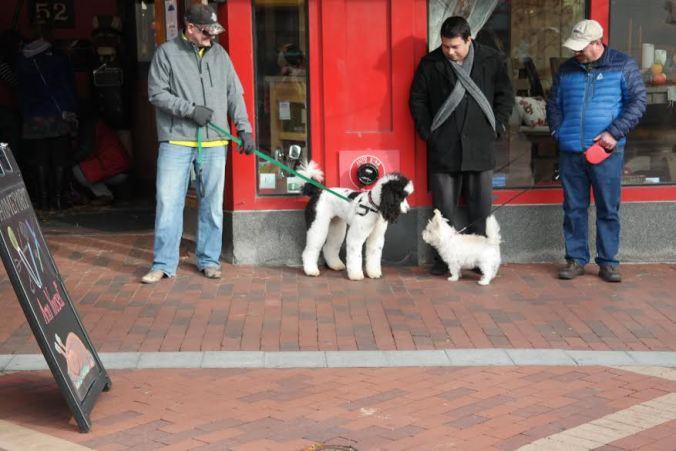 burly 1 dogs