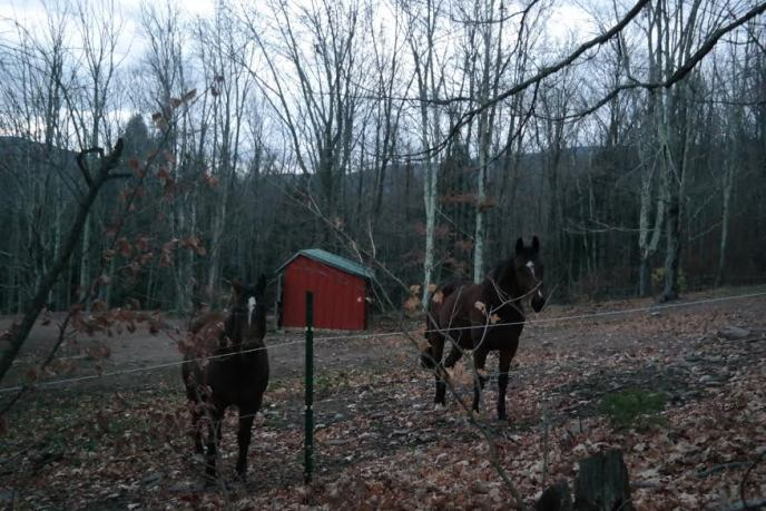 The neighhhhbor horses enjoy their last half hour of daylight.