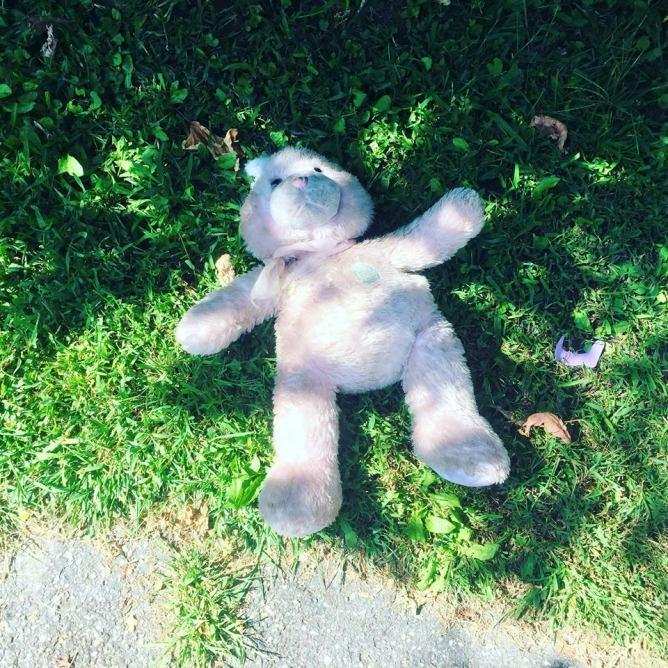 VT Teddy bear had a rough night.