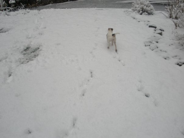 daisys first snow