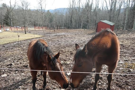 horses 1