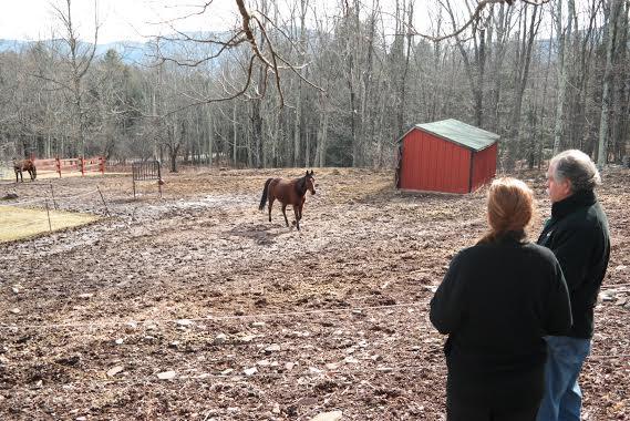 mama and horses.jpg