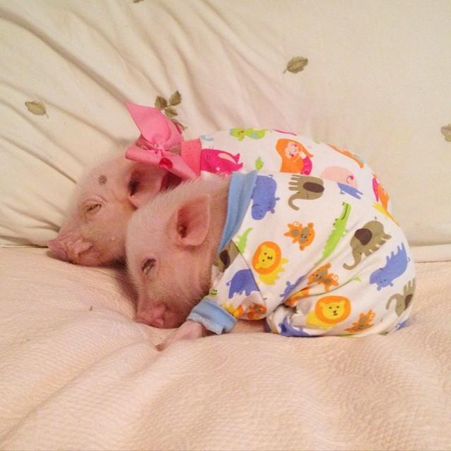 Prissy pig.jpg