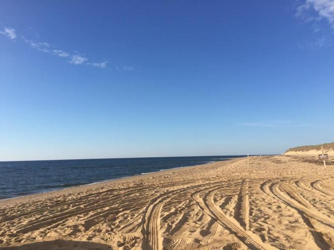 beach tracks.jpg