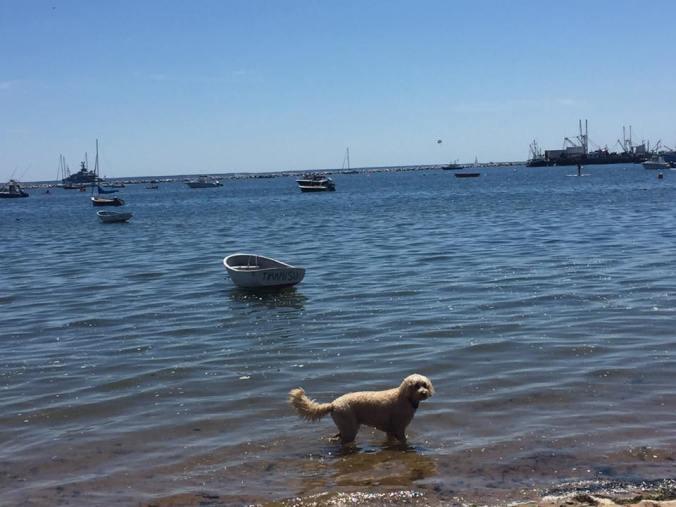 pooch beach