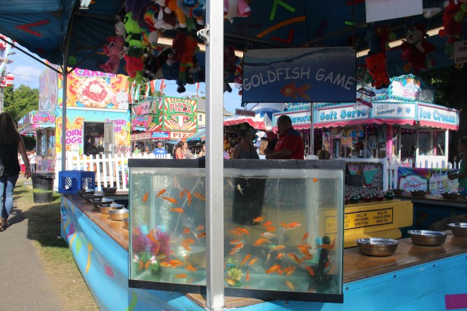 goldfish game at fair_1.jpg