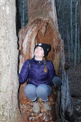 tree-2