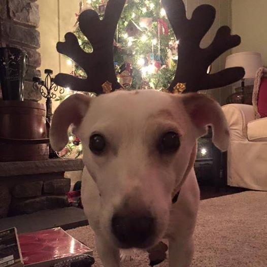 tubby-reindeer