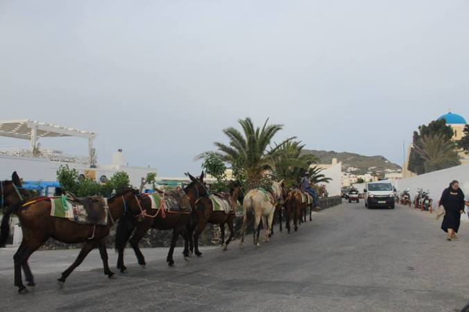 donkeys in oia.jpg