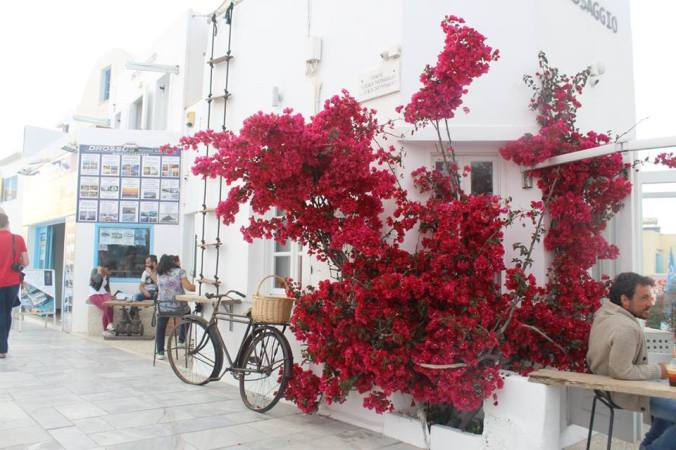 flowers in oia.jpg