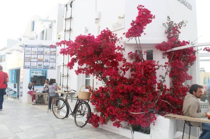flowers in oia.jpg