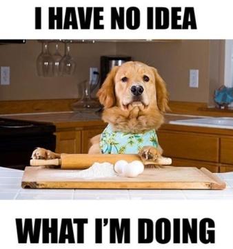 adulting dog.jpg