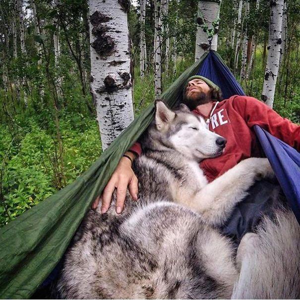 camp dog.jpg