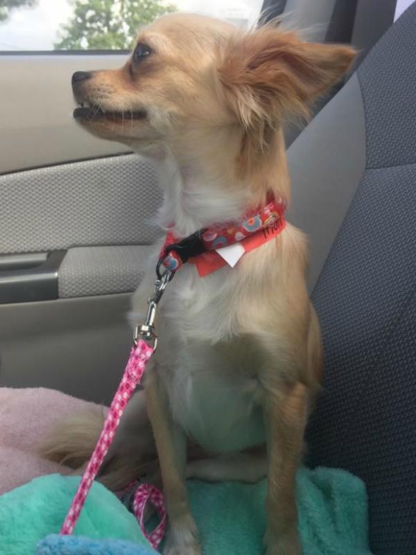 molly in car