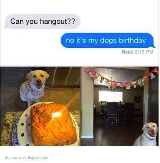 dog bday.jpg