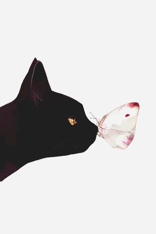 cat and butterfly.jpg