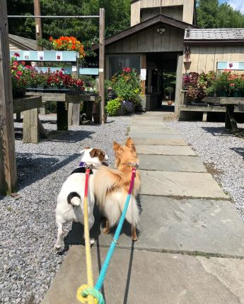2 pups on leash 2