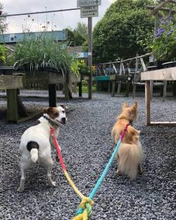 2 pups on leash