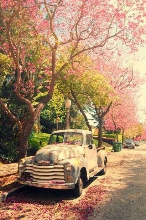 spring pic.jpg